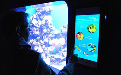 palma aquarium2
