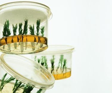 plant containers tissue culture